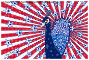 Star Spangled Peacock 24x36